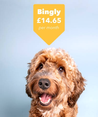 Picture of a dog called Bingly looking happy at his price of £14.65.