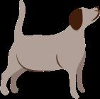 Pour les chiens en surpoids