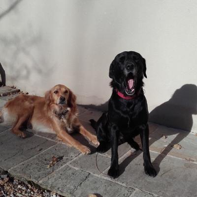 Je recommanderais tails.com à tous les propriétaires de chiens.