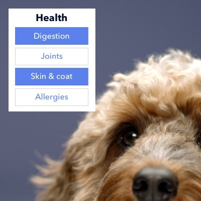 dog answering questions about health for a tailor-made blend