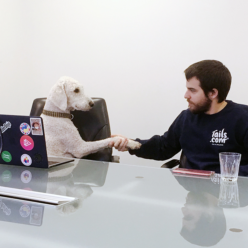 businesss meeting with dogs