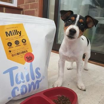 Sonia Milly the JRT puppy from Maidstone