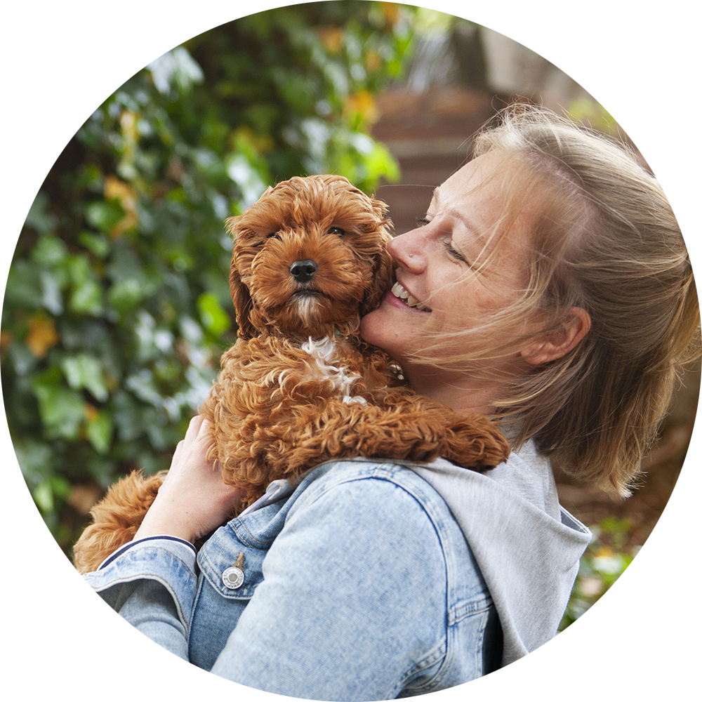 Owner holding a Cavapoo puppy